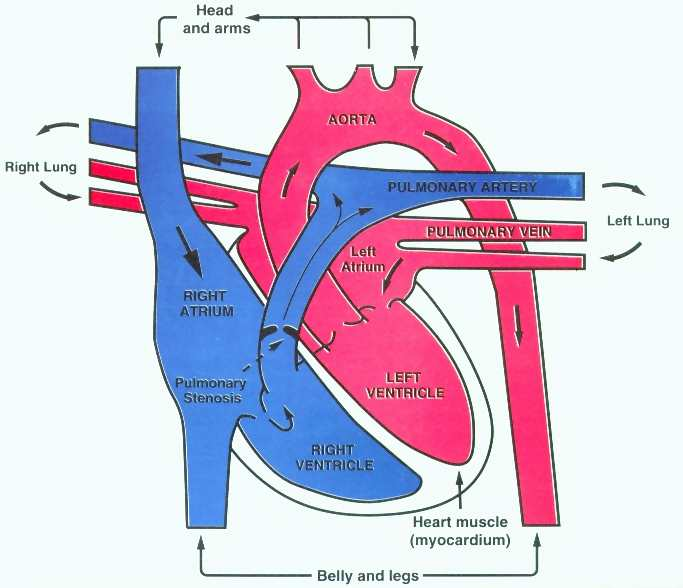the process of cardiac catheterization Page 3 cardiac diagnostic services cardiac catheterization lab procedures artery system arteries of the heart, including the coronary arteries.