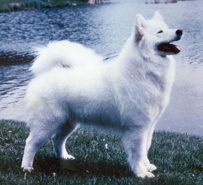 Pedigree of puppy from Casey x Katie breeding